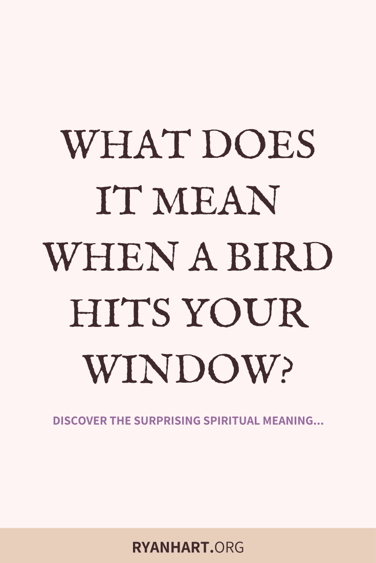 3 Spiritual Meanings of Birds Hitting Windows | Ryan Hart