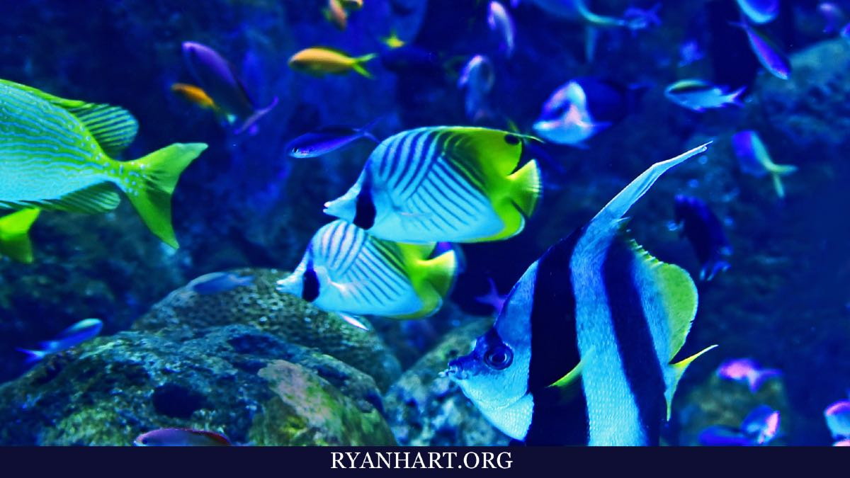 What Does it Mean When You Dream About Fish? | Ryan Hart